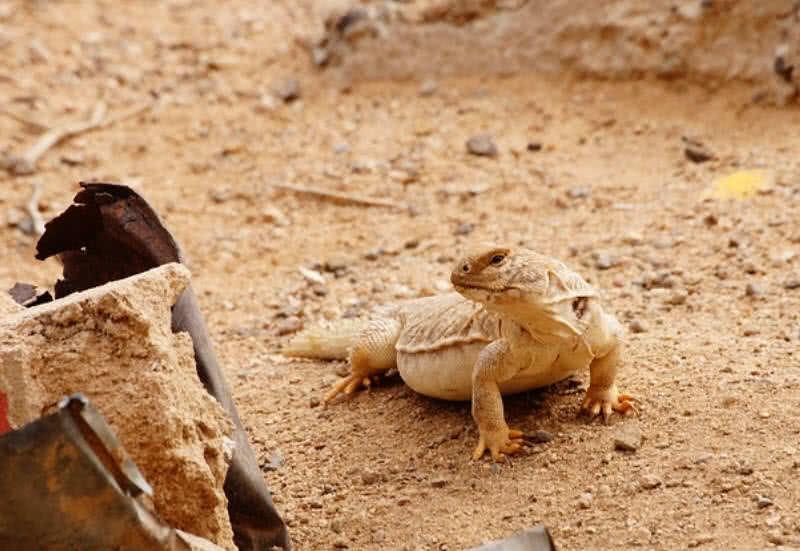 Monitor del desierto