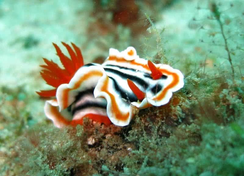 1606098151 2 Las 10 criaturas oceanicas mas increiblemente coloridas