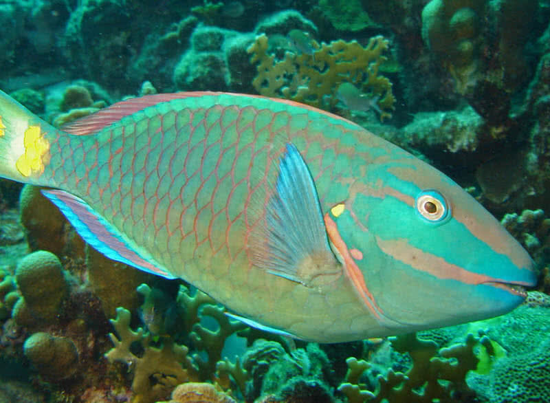 1606098151 416 Las 10 criaturas oceanicas mas increiblemente coloridas
