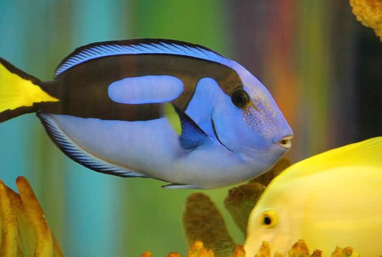 1606098151 417 Las 10 criaturas oceanicas mas increiblemente coloridas
