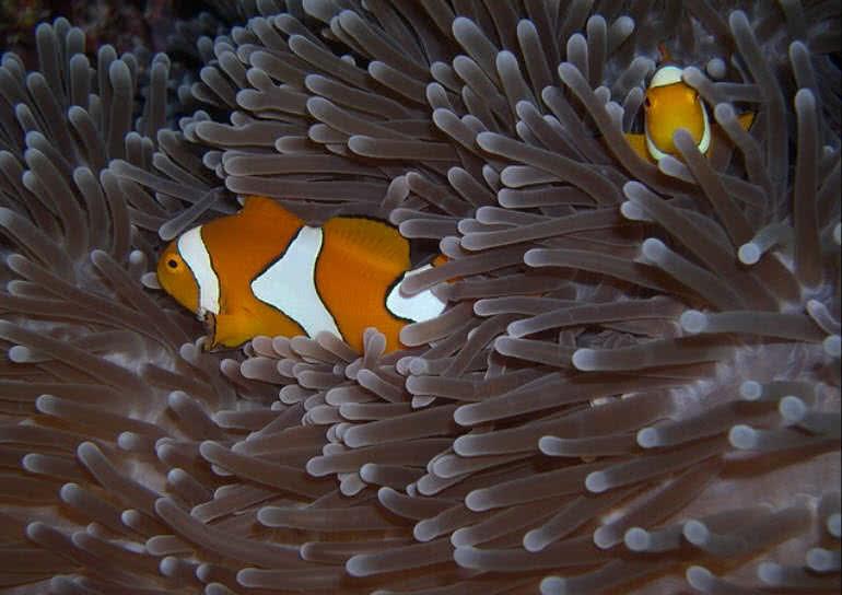 1606098151 857 Las 10 criaturas oceanicas mas increiblemente coloridas