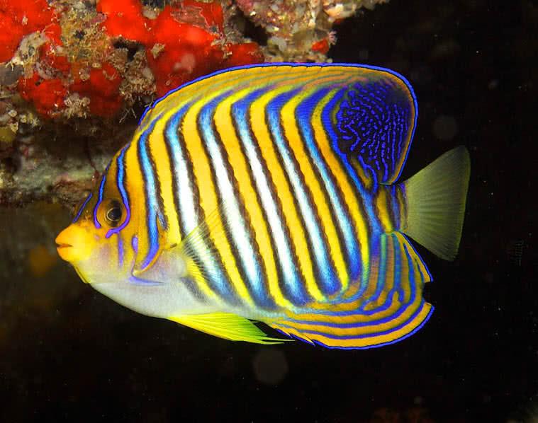 1606098151 946 Las 10 criaturas oceanicas mas increiblemente coloridas
