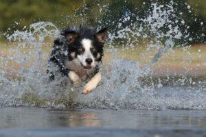 1606109083 826 Las 10 razas de perros mas amigables