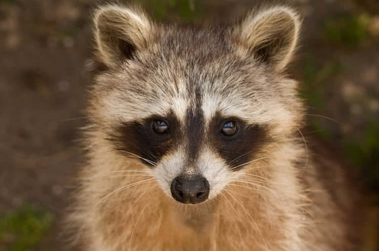 1606119920 598 Los 10 animales nocturnos mas bellos del mundo