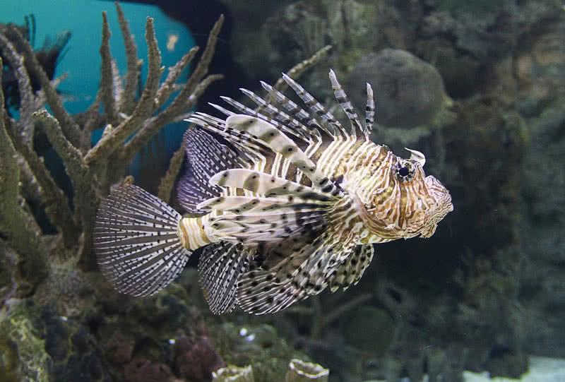 1606130767 349 Los 10 peces mas mortiferos del mundo