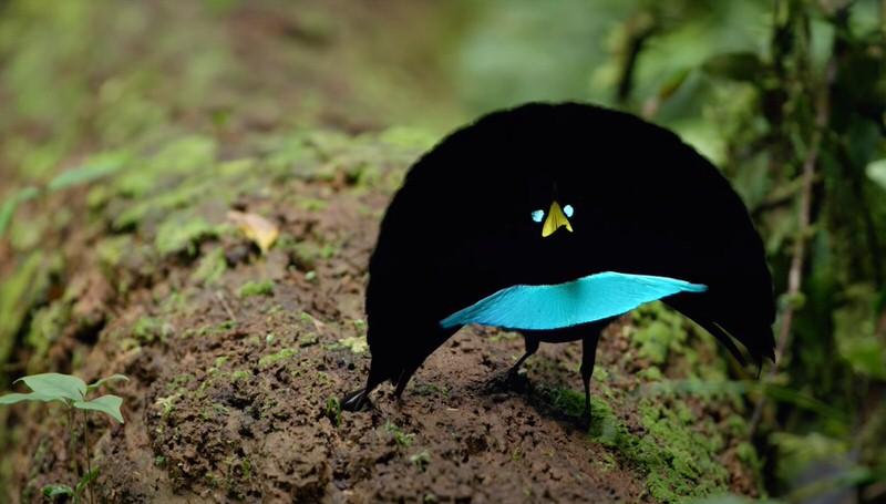 1606141820 969 Las 10 aves mas extranas del mundo