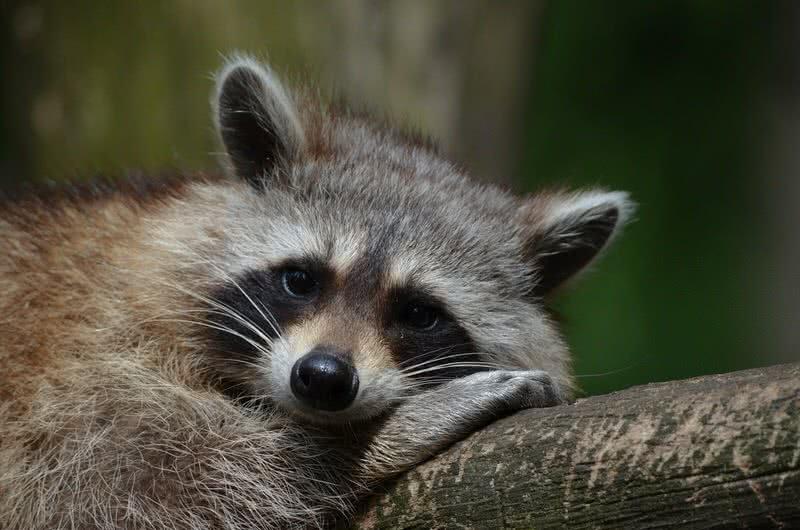 1606163598 265 8 animales lindos pero peligrosos en el mundo