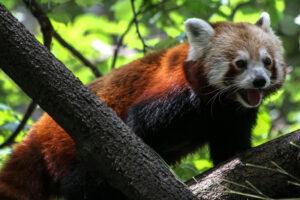 1606262248 510 Los 7 animales mas asombrosos del Himalaya