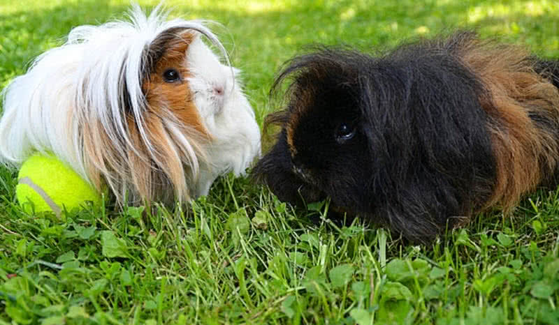 1606273078 179 Los 10 mejores animales con un cabello hermoso