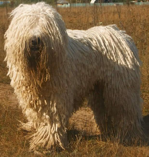 1606273079 613 Los 10 mejores animales con un cabello hermoso