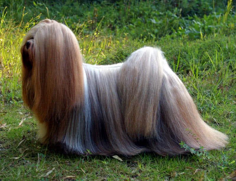 1606273079 796 Los 10 mejores animales con un cabello hermoso