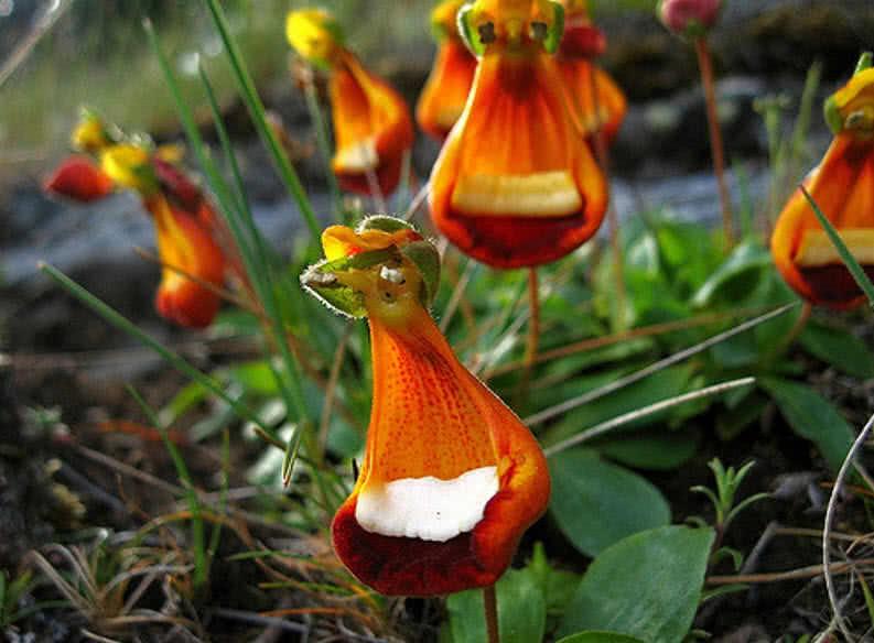 1606294867 854 Las 9 flores mas extranas del mundo