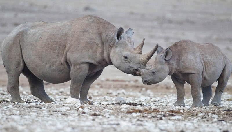 1606360592 498 10 animales que se han extinguido en la ultima decada