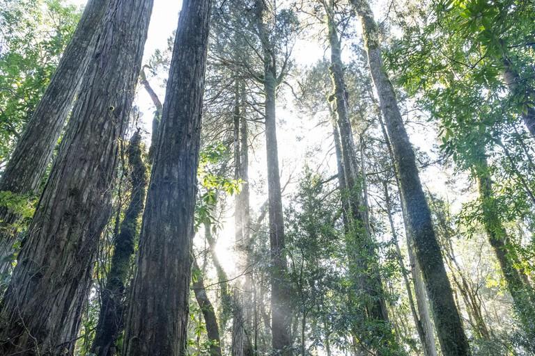 El Monumento Natural Lahuen Ñadi