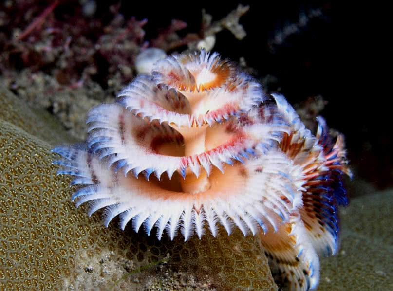 Las 10 criaturas oceanicas mas increiblemente coloridas