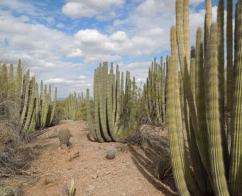 Jardín Botánico del Desierto